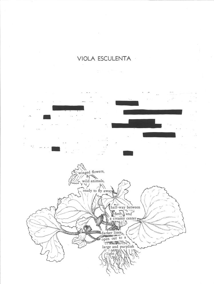 Viola esculenta