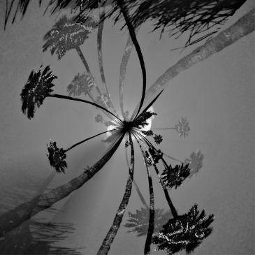 californiatrees-png
